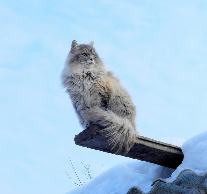 кошка на насесте