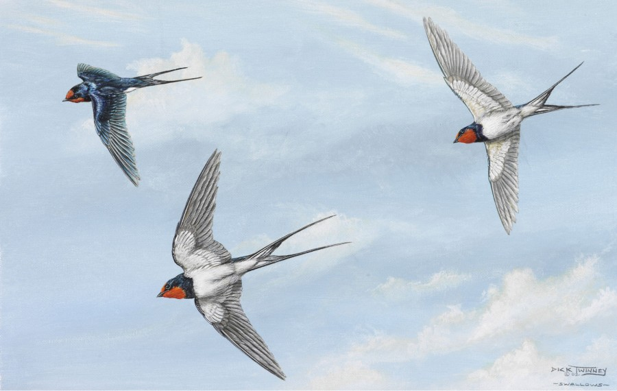 Swallows flying