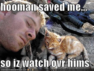 funny-pictures-veterans-day-cats-copy-5