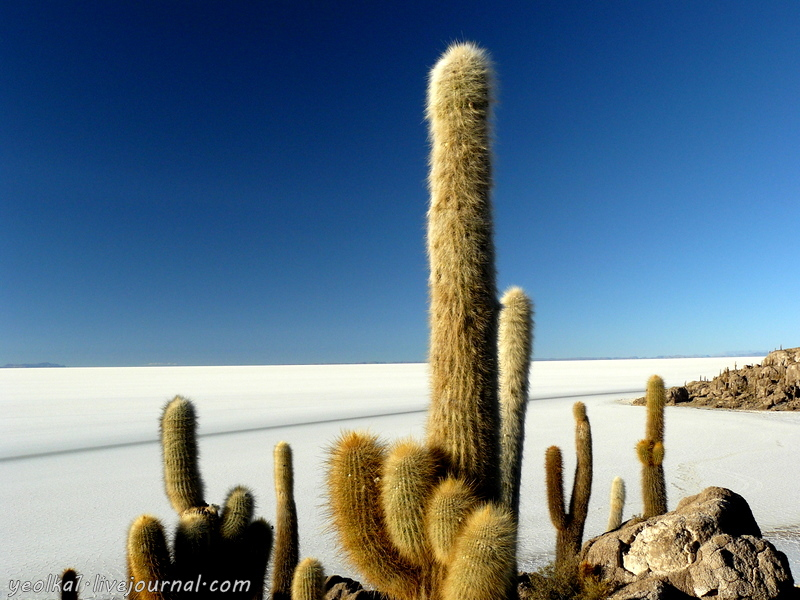 Un gran viaje a America del Sur.Боливия.Выход в космос.Остров Инкауаси - кактусы на коралловом рифе
