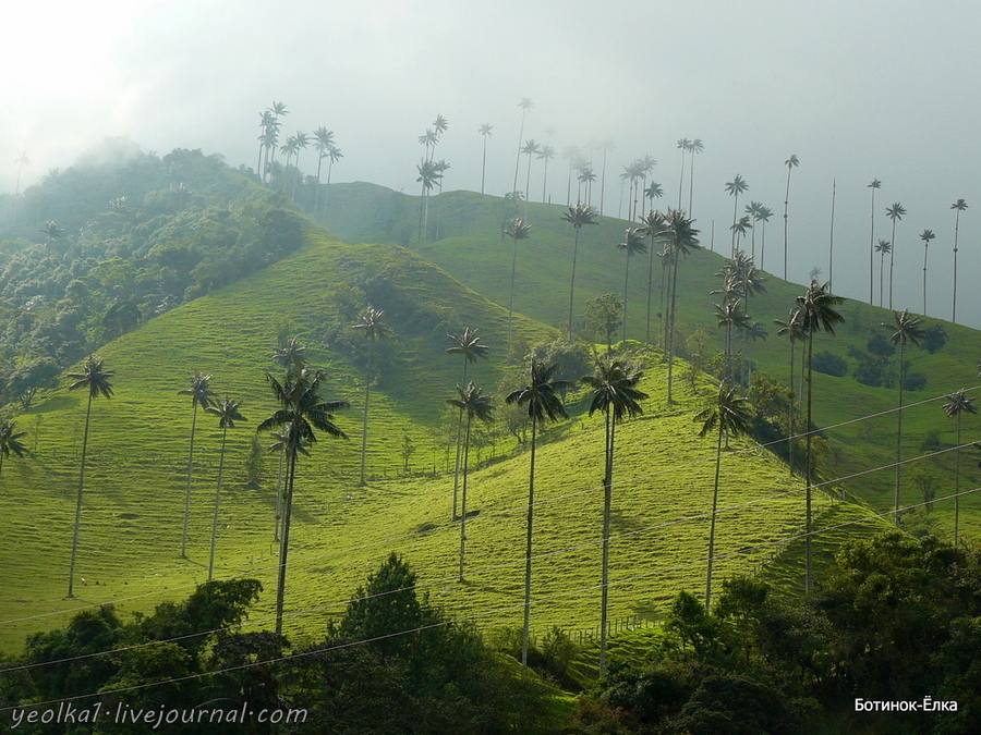 Колумбия - Con mucho gusto! Долина Кокора - самые высокие в мире пальмы, лошади и колибри...