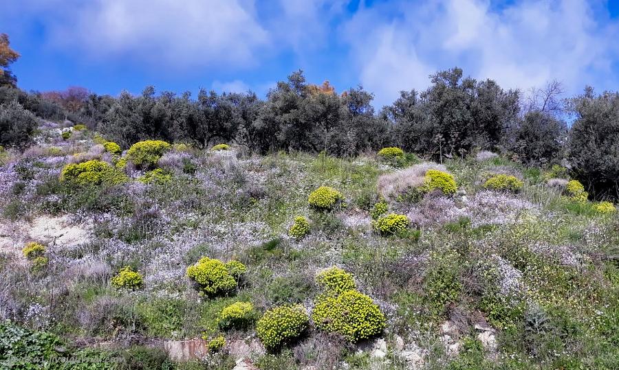 Незнакомый Израиль. Встреча с огненной саламандрой в лесу Бирия 20210213_100647_2-001.jpg