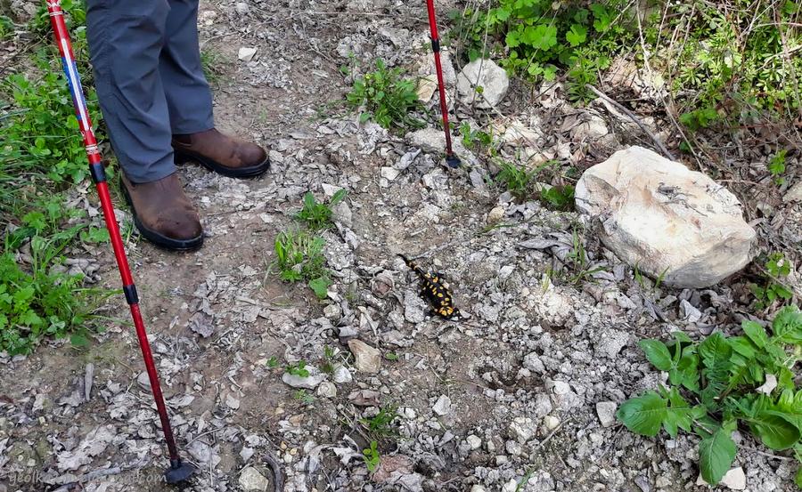 Незнакомый Израиль. Встреча с огненной саламандрой в лесу Бирия 20210213_102623_2-001.jpg