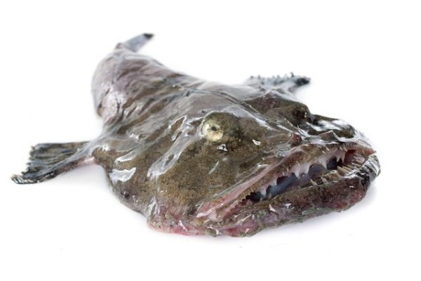 monkfish.jpg.638x0_q80_crop-smart