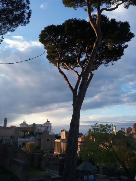 Roma - фото Ирины Сурат2