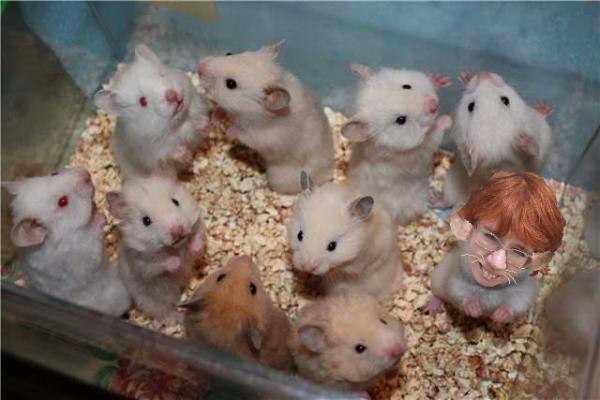 !  Крыска Женька помещена в специальный аквариум.png