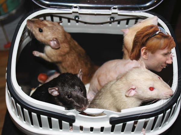 !  Крыску транспортируют в специальном контейнере.png