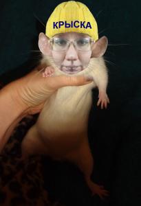 крыске не везёт
