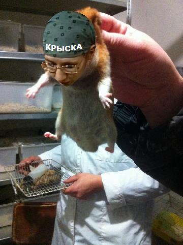 Крысик пойман 2.png