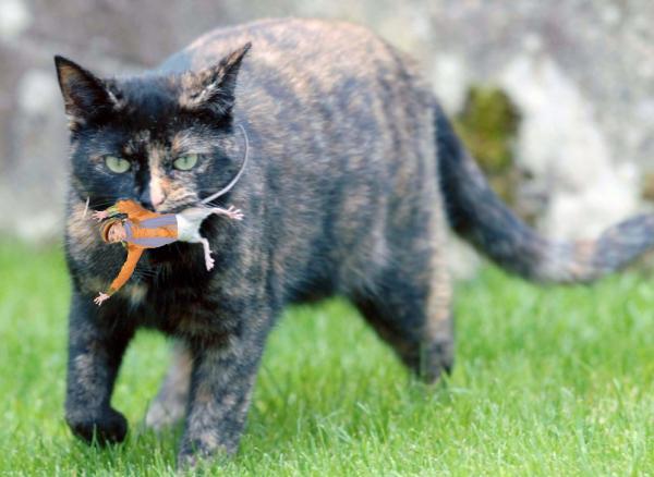 Кот терзает Женю 0 png.png