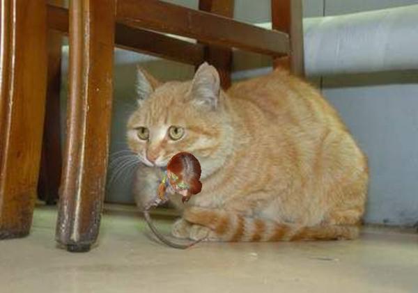 бильчик и кот 3.png