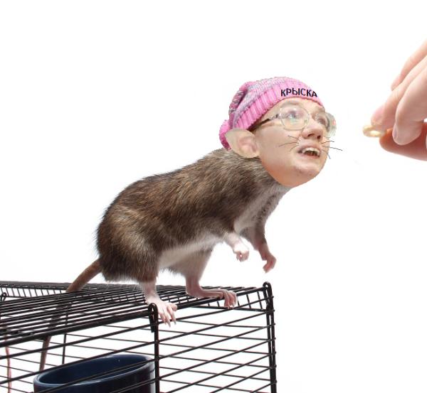 Крысу Женю кормит добрый хозяин.png