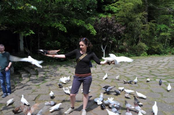 wuyi-me doves