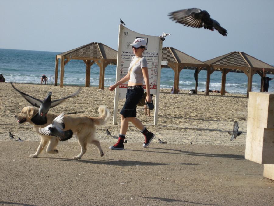 dogbeach 038.jpg