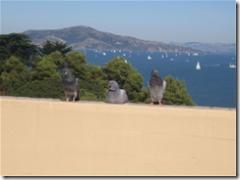 Fat Pigeons!