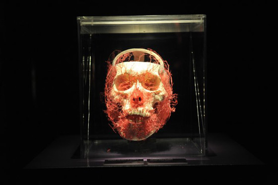 the-human-body-exhibition-4