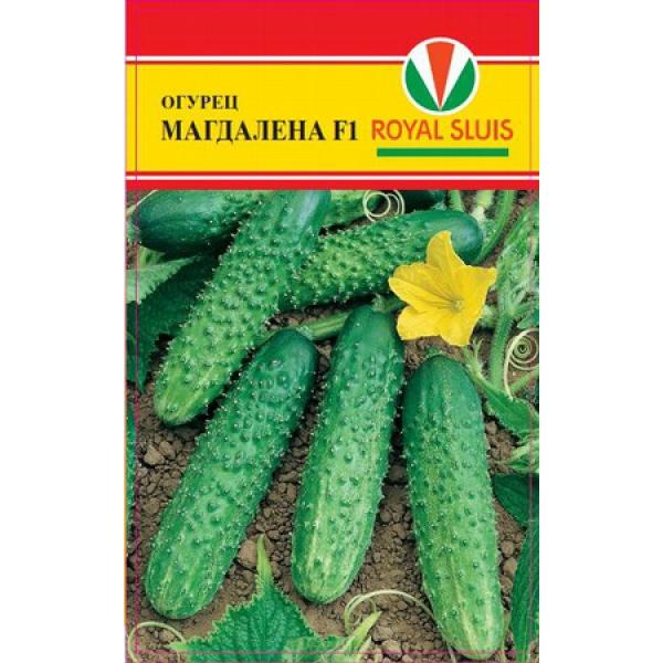 ogurets-magdalena-f1-2938-B