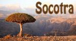 Иконка socotra.ru