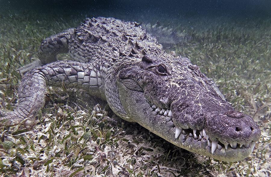 croc uw 900px