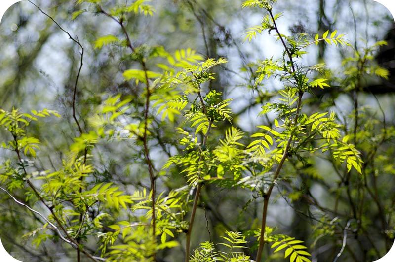 Зелёная эйфория