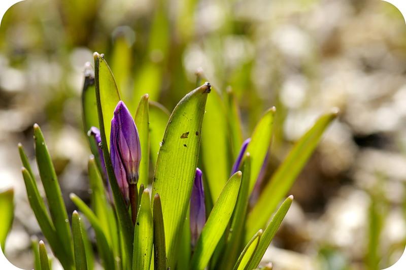 Весна на просвет