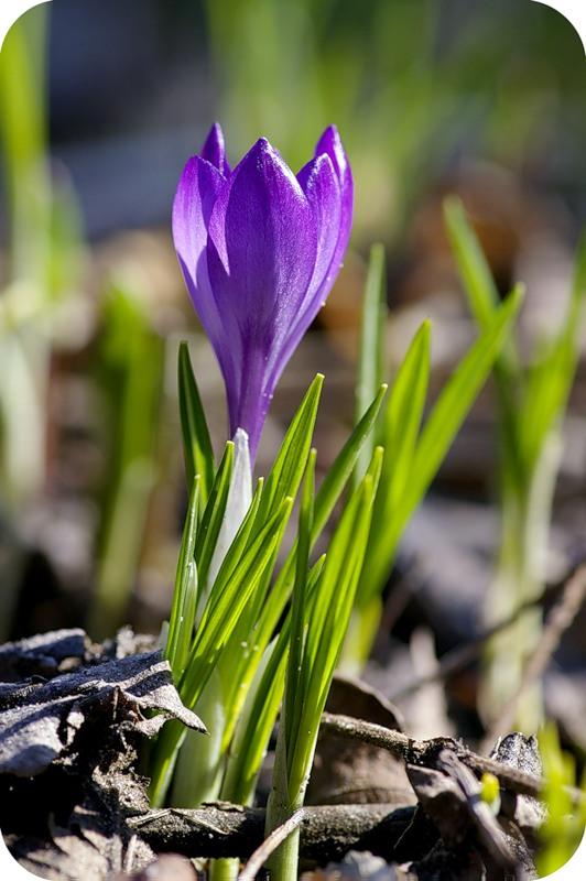 Власть весны