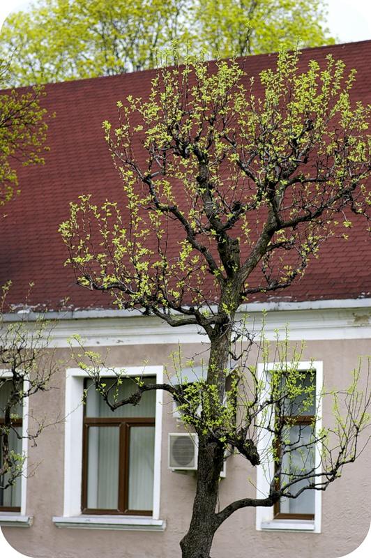 Время прозрачных деревьев