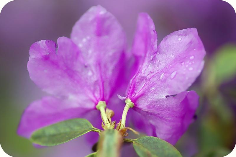 Взмах цветка