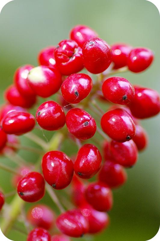 Красные лаковые