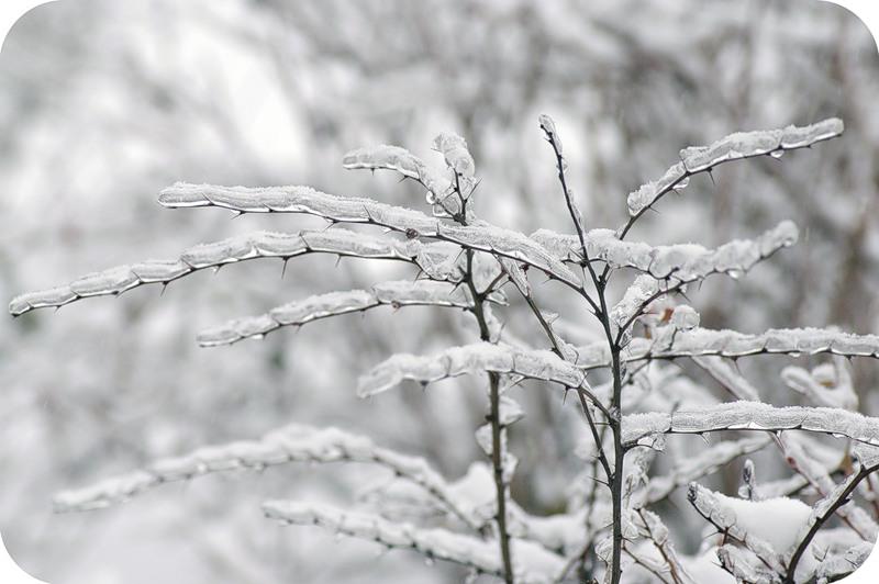 Ледяные червячки