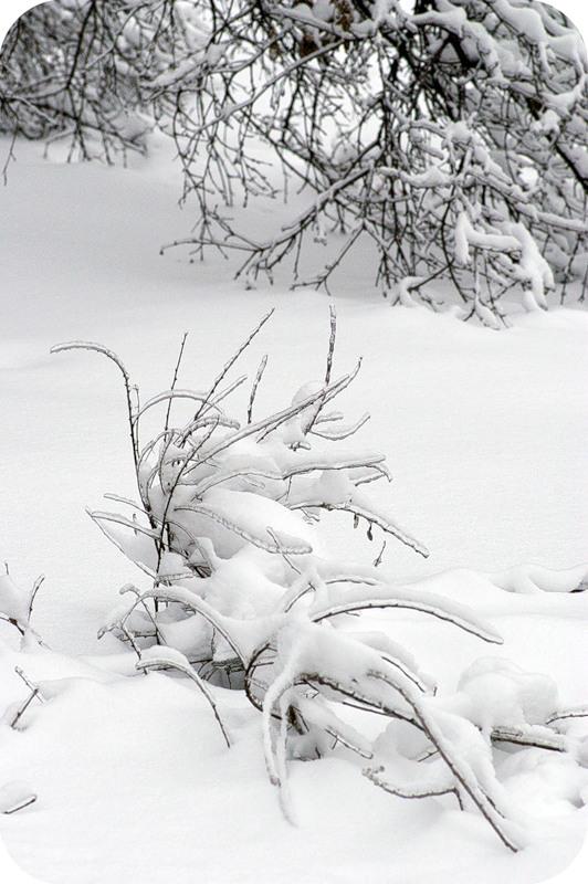 Иероглифы на снегу