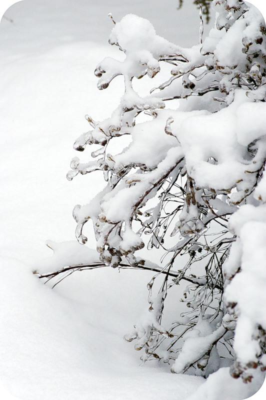 Во снегах и во льду