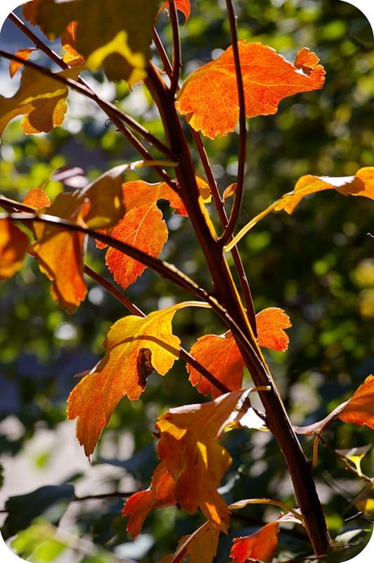 Осень на просвет
