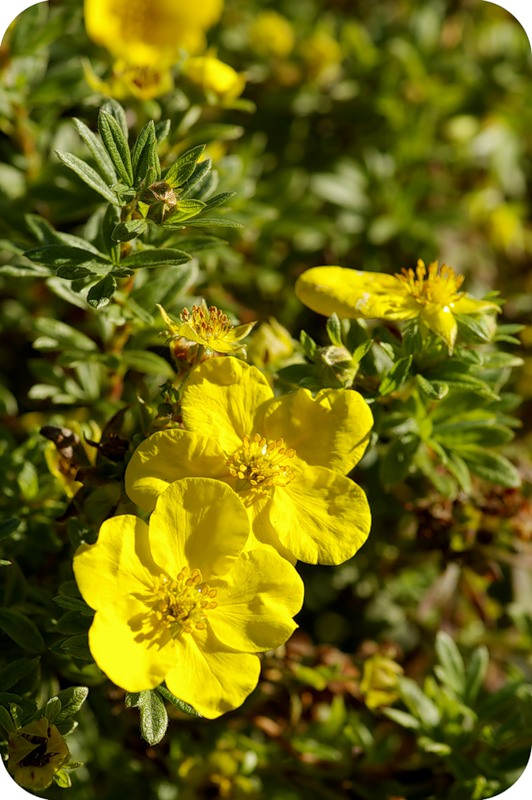 Жёлтые