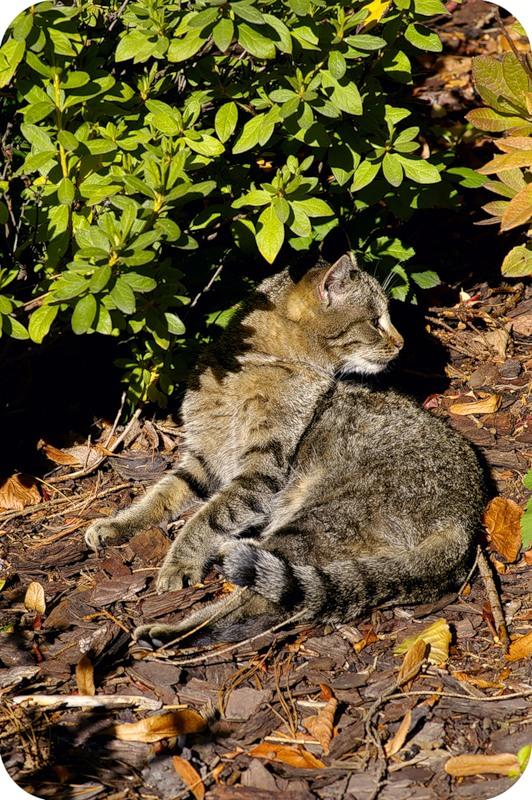 Котейка на вересковой горке