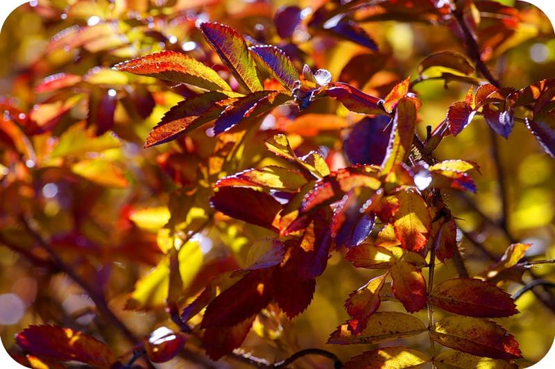Листья огня