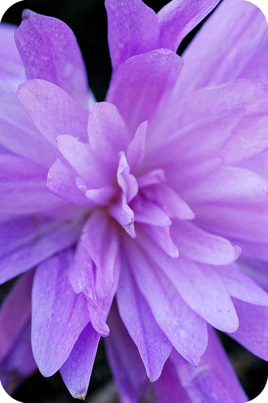 Объятия цветка