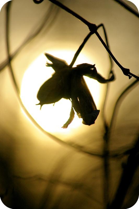 Ужас летящий на крыльях ночи