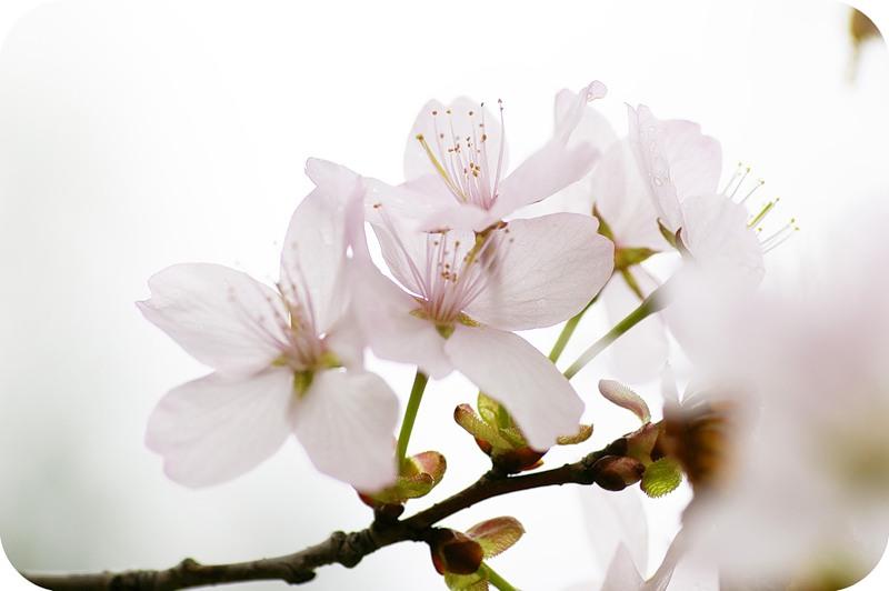Нежность цветка