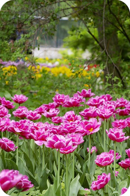 Ещё сад