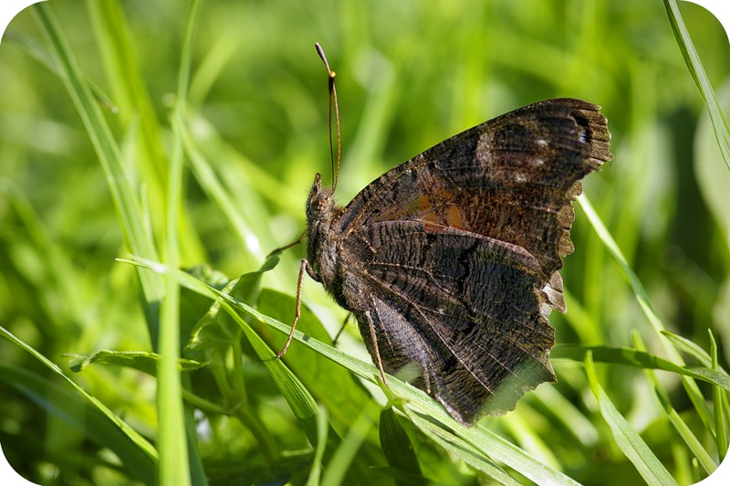 Изнанка бабочки