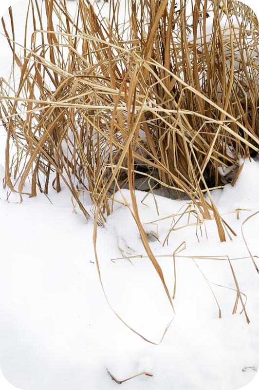 Зимовье травы
