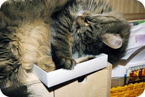 Кошка и коробка