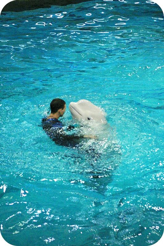 Танец с дельфином