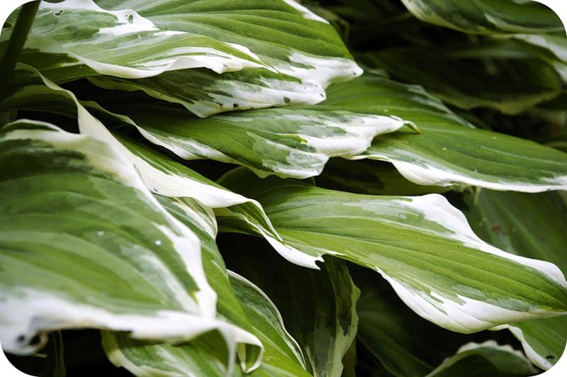 Сухопутные водоросли