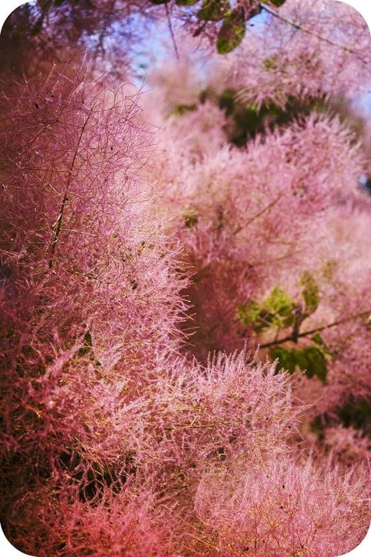 Розовый пух