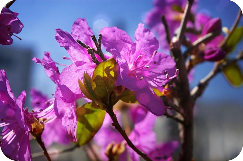 Цветы на ВВЦ