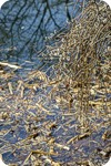 Шариковое дерево