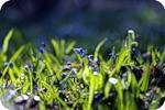 Жизнь в траве
