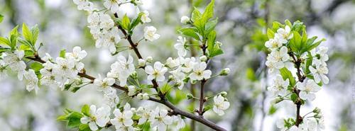 10 заглавных картинок с белыми цветами